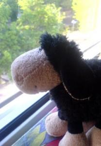 Schwarzes Schaf guckt aus dem Fenster